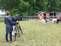 20.5.2020 : Heute war der NDR bei uns und wollte unser Alpakafohlen Ronja kennenlernen. Hier ist der Link zum Video: