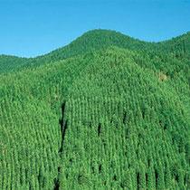 森林整備加速化・林業再生事業費補助金