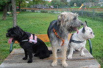 Zoey-Chica und Günther von links nach rechts