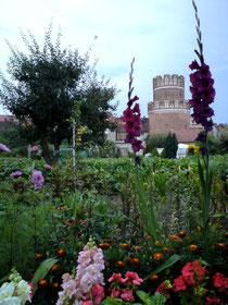 Blütenpracht der Gärten in der Hansestadt Werben vor dem Elbtor