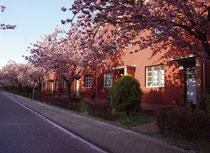 Hufeisensiedlung Onkel-Bräsig-Straße