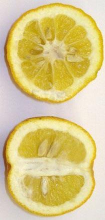 Propiedades del Naranjo amargo