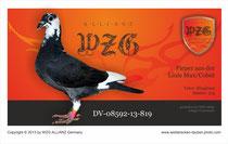 Die 819 wird ohne Leistungs-Nachweis sofort in die Zucht genommen und unter Berücksichtigung der Blutführung, der Linie und des vererbungsstärksten Stamm-Vogels verpaart...