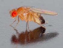 Bild: Wikipedia