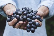 Weintrauben Hände