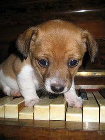 かわいい子犬には癒されます