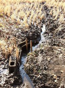 来週から始まる荒起こし作業に向けて、田んぼにたまった水を抜く作業。溝を作って、脇の水路に流します。
