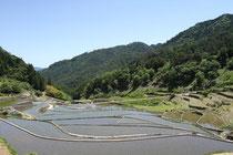 広島県安芸太田町の「井仁の棚田」(撮影:岩間敏彦)  *写真はイメージです。記事内容とは直接関係ありません。