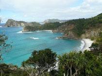 「東洋のガラパゴス」とも言われる小笠原諸島  Photo By phaphapha