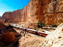 Train Lézard Rouge