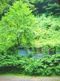 夏の緑の砦