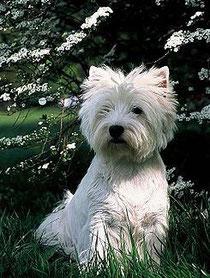 Yo no soy un perro corredor. Corre tú, que yo te espero a la sombra.