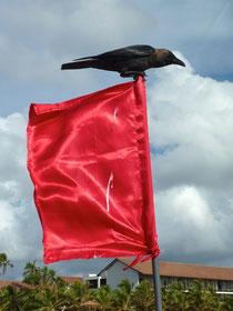 Bild: Badeverbotsflagge