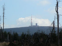 Brockenblick vom Torfhäuser Moor