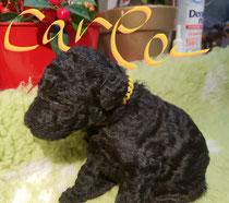 Carla 2,5 Wochen