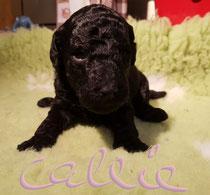 Callie 2,5 Wochen