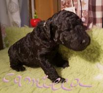 Camilla 2,5 Wochen