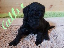Callie 3,5 Wochen