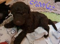 Charles 3.5 Wochen