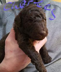 Charles 2,5 Wochen