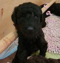 Camilla 3,5 Wochen