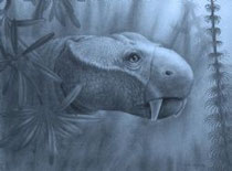 Dicynodon lacerticeps Image by Marlene Donnelly, Field Museum of Natural History, Chicago