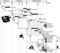 Strict consensus tree of the phylogenetic relationships of Arcovenator escotae within Ceratosauria, shown on a stratigraphic (Gradstein et al., 2012) and palaeobiogeo-graphical (Holtz et al., 2004) framework.