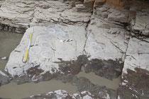 盤亀台岩刻画内の恐竜の足跡の化石