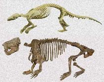 上はセンザンコウ、下側が標本の骨格