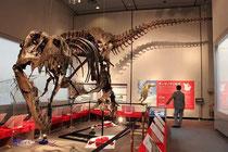 """ティラノサウルス""""スタン"""""""
