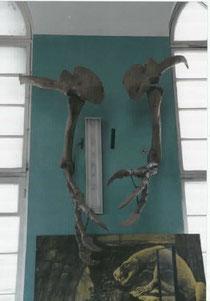ウランバートルの自然史博物館で