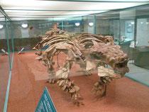 神流町恐竜センターのサイカニア