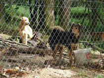 Ungarische Hunde aus dem Tierheim.