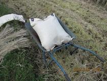 一輪車のお米、結構重いのデアル。
