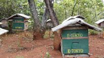 巣箱設置から10年目、巣箱をリニューアル。緑に塗り、E. Tokyoの名前を入れました。