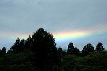 大杉にかかる彩雲