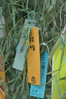 LifeTeria blog 七夕