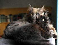 Awiwa mit ihrem neuen Freund Mauzi