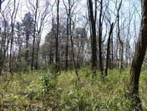 芽吹き出した雑木林