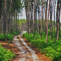 La forêt des landes est un lieu privilégié où vous pourrez profiter de votre séjour alimentation-santé ou fibromyalgie