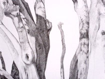 olive tree (detail/in progress)