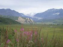 trekking Yukon