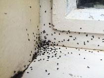 Diese Ameisen konnte ich vor dem Sturm auf meine Küche stoppen