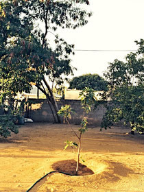 Ein Baum gefällt, ein neuer gepflanzt