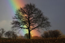 Baum in Neritz