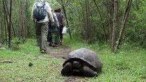 Unos paseantes caminan junto a una tortuga gigante, símbolo de las islas.