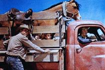 Bild aus dem Film Nebraska