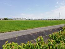 お散歩は、のどかな田んぼ道😄