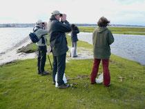 Team Graswarder bei der Vogelzählung
