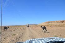 Kaiserwetter und Kamele.